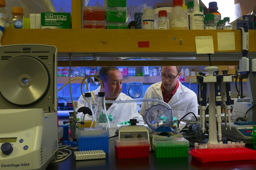 Eric Hesek (left) senior researcher associate and Matt Weinstock, the principle scientist leading the research at Synthetic Genomics Inc in La Jolla discuss some of their recent experiments in their research.