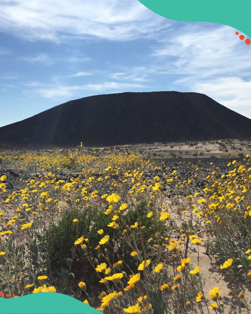 View of Amboy Crater and wildflowers.