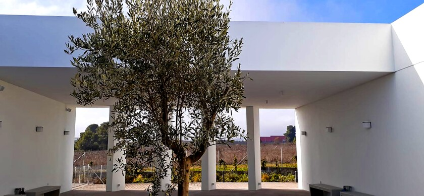 Olive trees are planted around the minimalist Ritsona Crematorium.