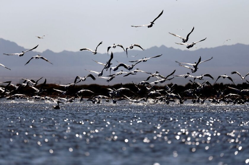El hallazgo demuestra que la extinción de otras aves sigue ocurriendo a medida que pasa el tiempo y el clima cambia.