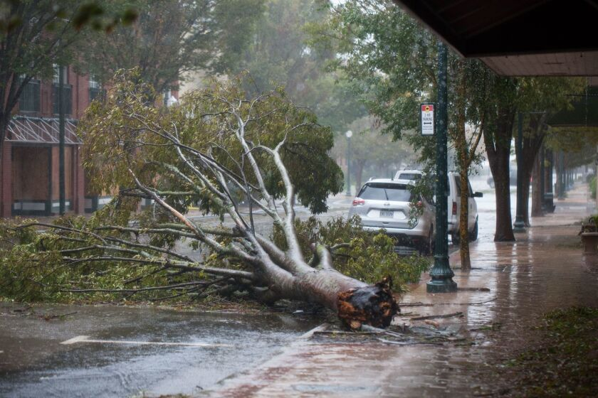 A downed tree can be seen on Middle Street by the Neuse River in New Bern, North Carolina, on Friday during Hurricane Florence.