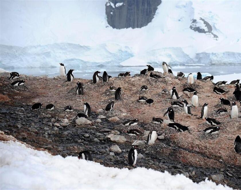 Photo taken Jan. 12, 2019, by a member of the Homeward Bound expedition on Antarctica's Danco Island showing a colony of penguins. EFE-EPA/ Anne Charmantier