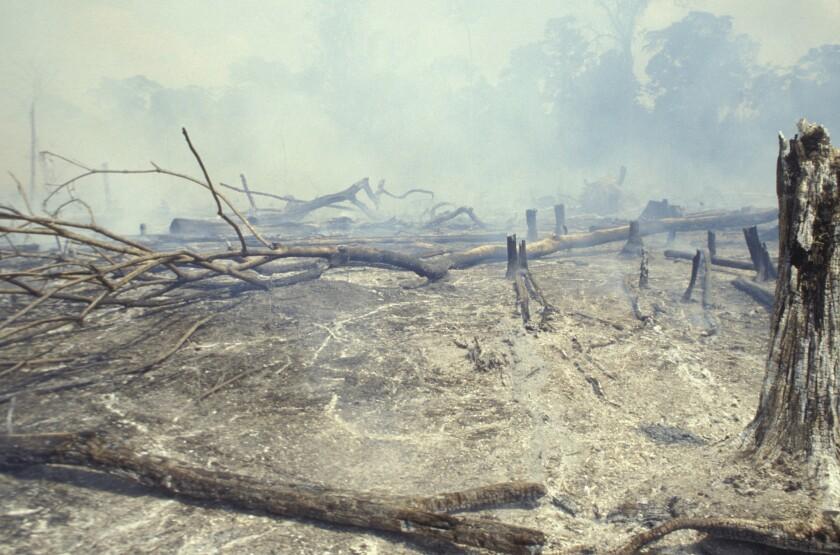 Scene of deforestation in Brazil