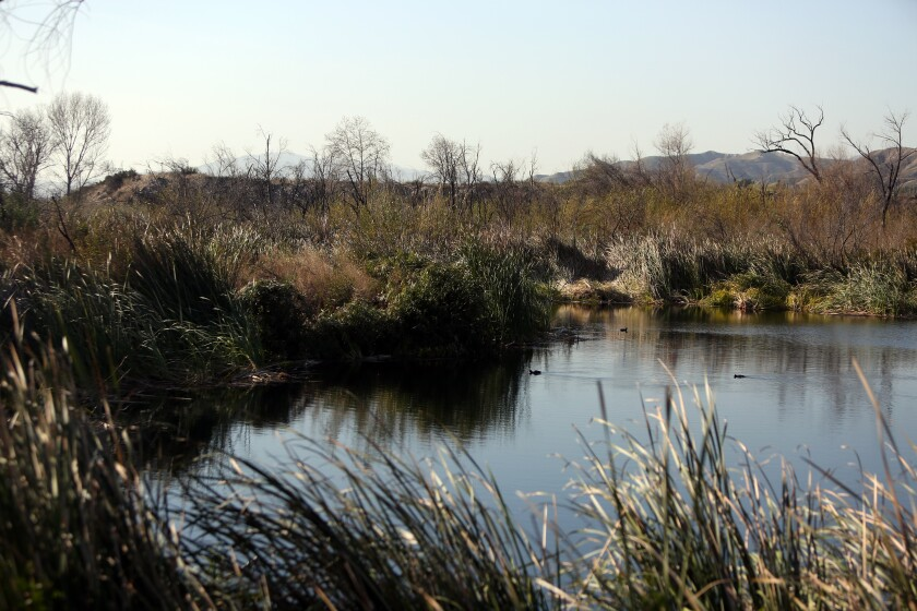 The first of the Tujunga Ponds, an unlikely wildlife sanctuary south of the 210 Freeway in the Sunland-Tujunga area.