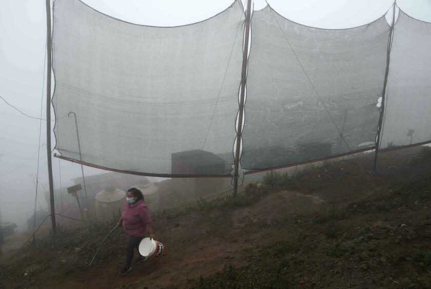 Justina Flores pasa junto a redes de polietileno para atrapar la niebla que proporcionan agua a los habitantes de la barriada de Pamplona Alta en Lima, Perú, el jueves 16 de septiembre de 2021. (AP Foto/Martín Mejía)