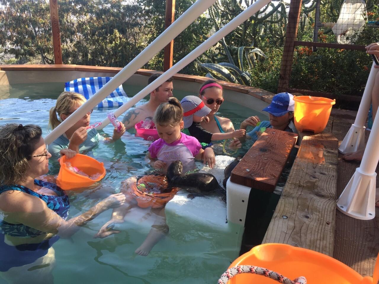 Nurtured by Nature swim with otters program