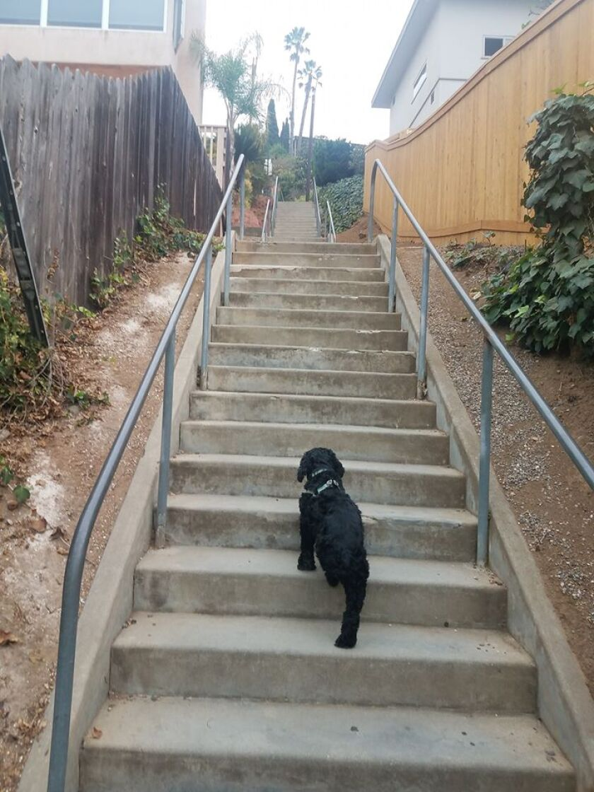 "A dog goes up some of the ""Secret Stairs"" near downtown La Mesa in this file photo from 2018. The city of La Mesa has closed the popular exercise site as part of protecting gatherings of people during the coronavirus pandemic."
