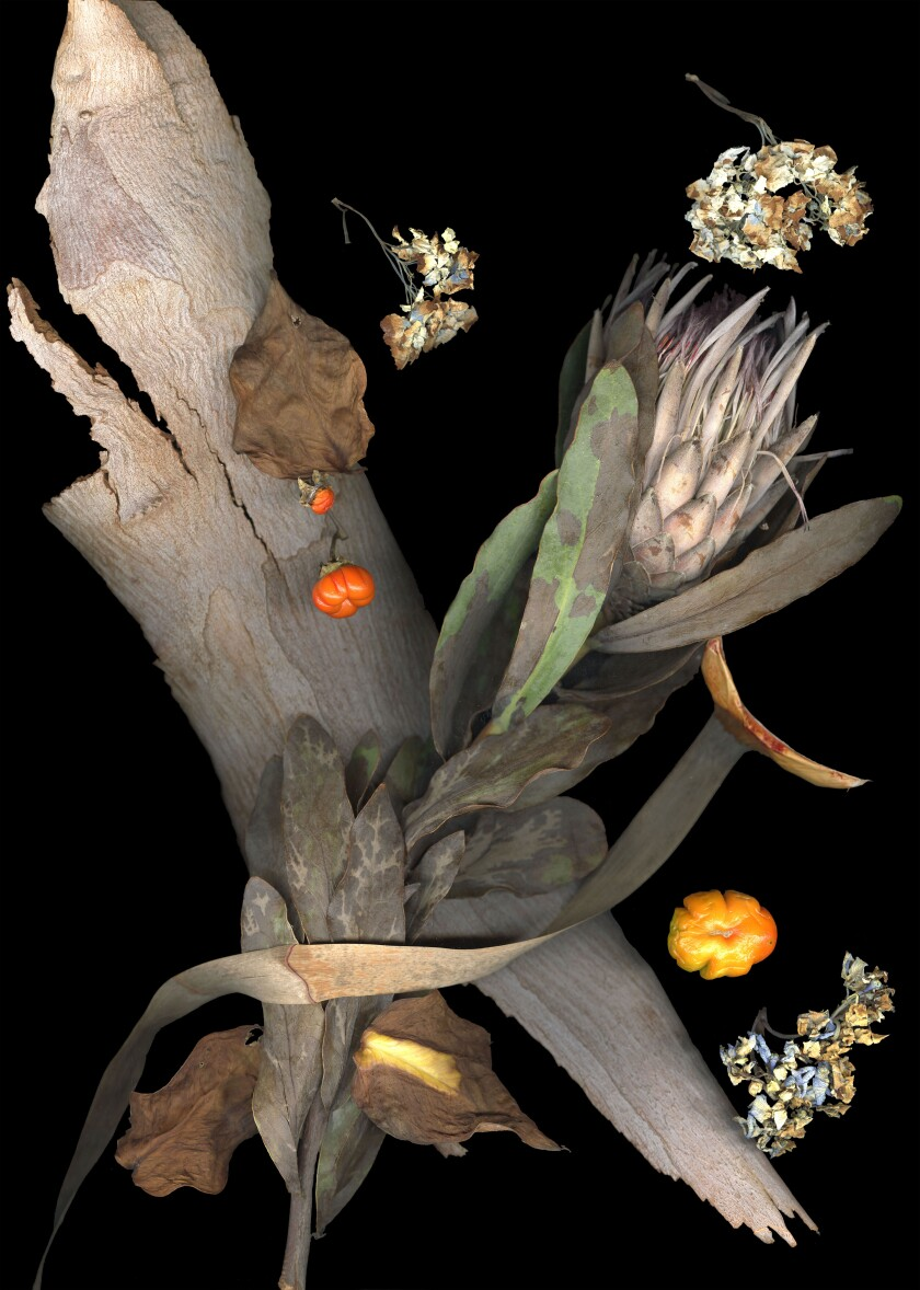 """This untitled image is a part of Faiya Fredman's """"Late Botanicals Series,"""" which were featured in """"The Steel Goddess: Works by Faiya Fredman, 1998-2018"""" at the Oceanside Museum of Art."""