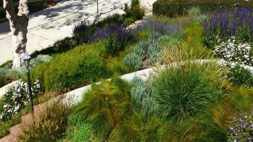 The salvia and verbena will bloom year-round, providing continuous color and interest.
