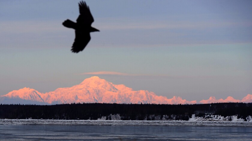 A raven rides a light breeze at Point Woronzof in Anchorage as Mt. Denali appears in the background. Delta is offering a $238 round-trip fare to Anchorage through the middle of spring.