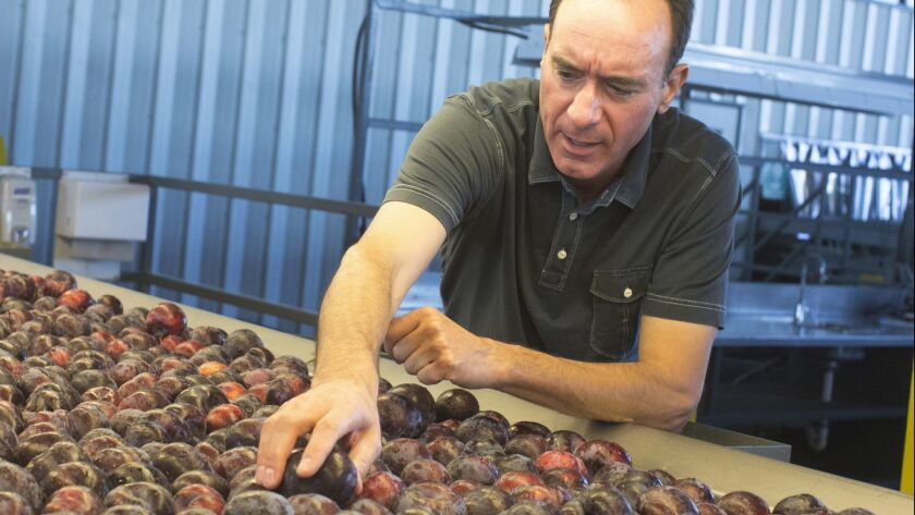 Dan Gerawan checks out plums on the line at his packing plant. Dan Gerawan, president of Gerawan Far