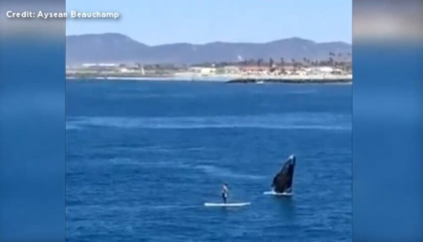 A paddle boarder is seen having a close encounter with a whale in Oceanside in this screen grab from YouTube video.