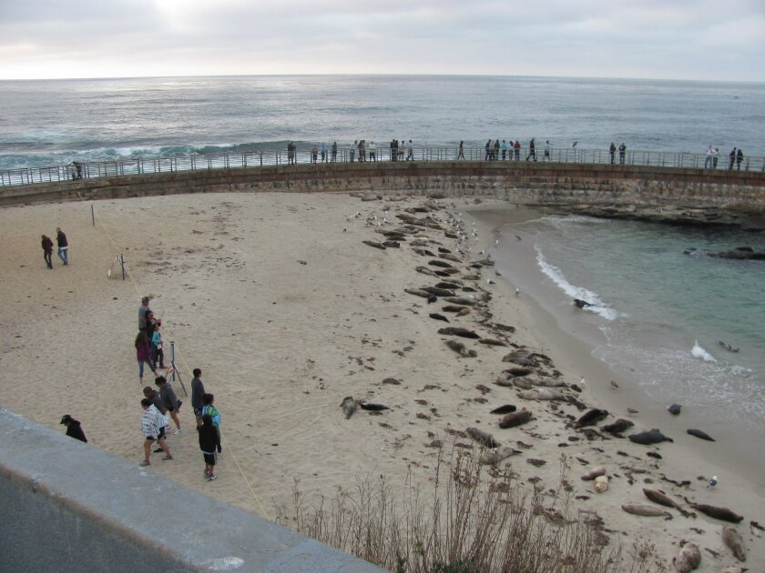On a recent evening at the Children's Pool a park ranger alerted visitors by loudspeaker that the beach would be closing each night at sunset.