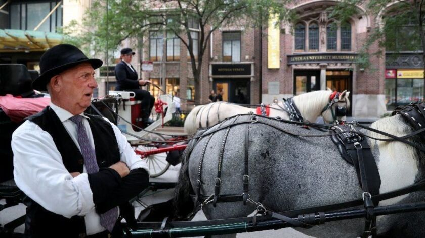 Carriage driver Dave Ford waits with his horse Callie beside the Chicago Water Tower on Aug. 29, 2018. Horse-drawn carriage owners are hoping to reach a compromise in the face of an ordinance outlawing the businesses.