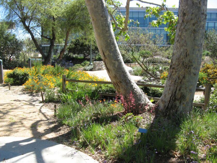 Golden West College native garden by Dan Songster.JPG
