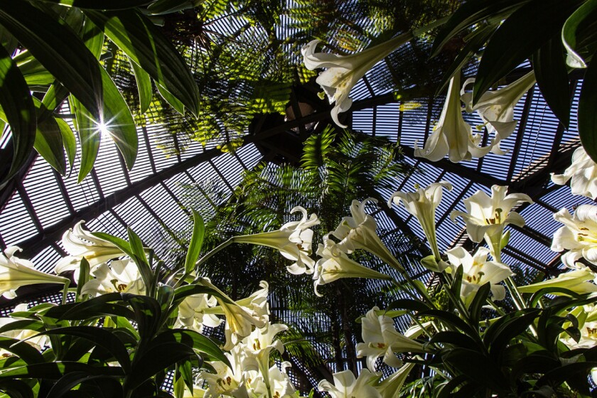 Light sparkles in amazing ways through the ornate roof structure of the Botanical Building at Balboa Park. (Eduardo Contreras/Union-Tribune)