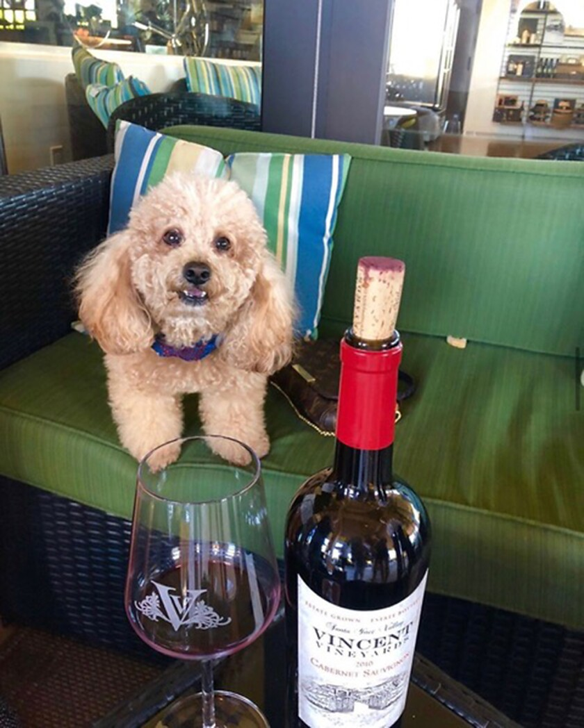 Vincent Vineyards in Santa Ynez is pet-friendly.