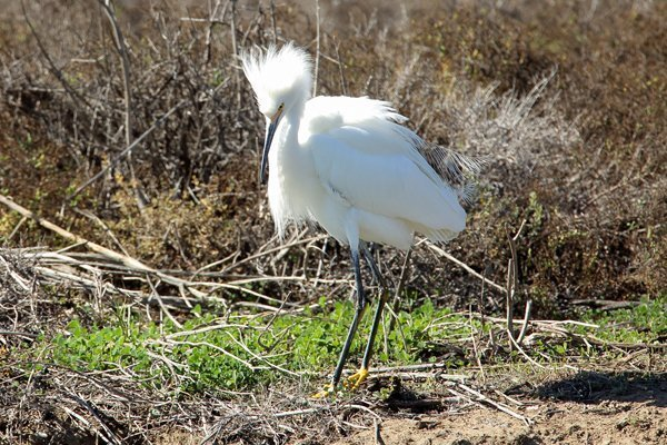 Wildlife abounds at the San Elijo Lagoon Nature Center
