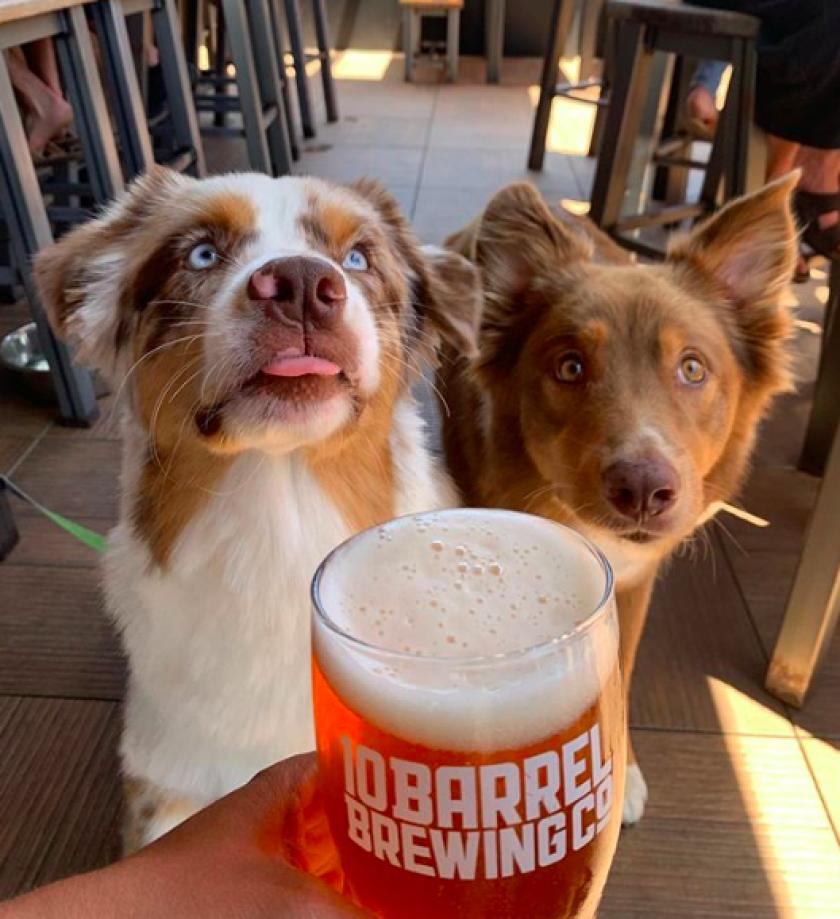 10 Barrel Brewing National Dog  Day