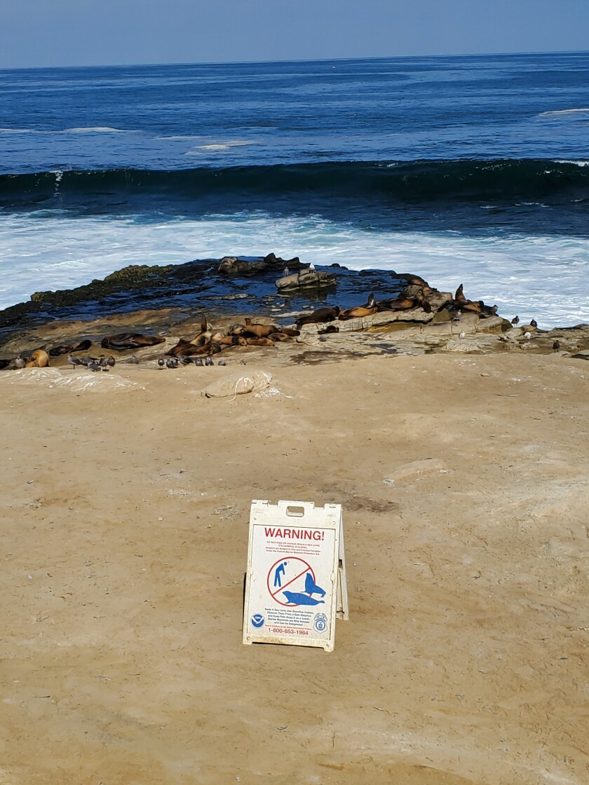 Signs warning people to keep their distance from sea lions remain at Point La Jolla.