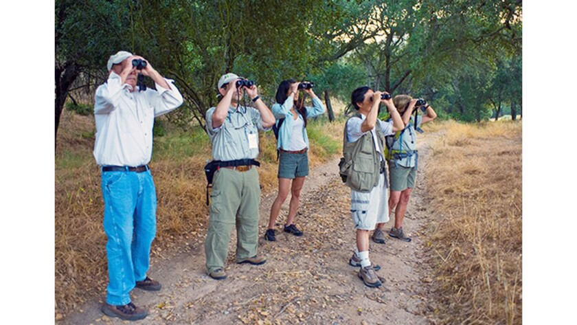 A quiet, meditative hobby for some and more of a competitive sport for others, birdwatching, or bird
