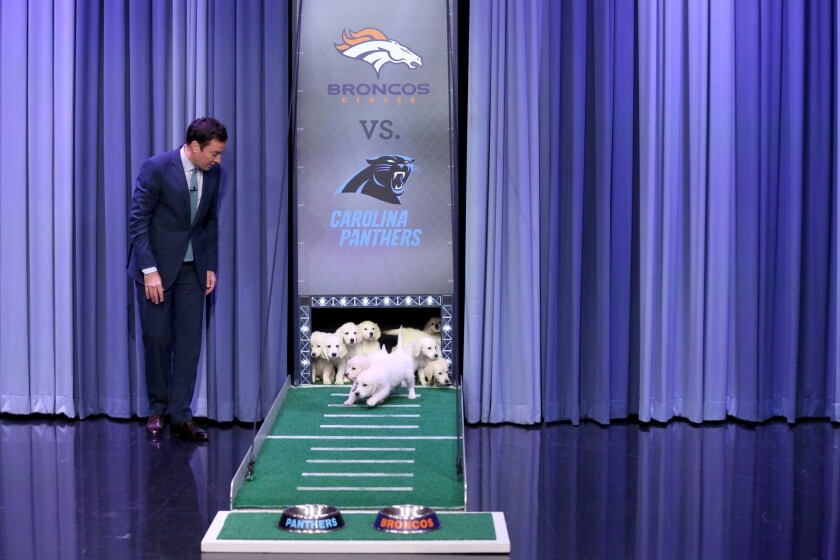 Jimmy Fallon and puppy pals predict Super Bowl winner