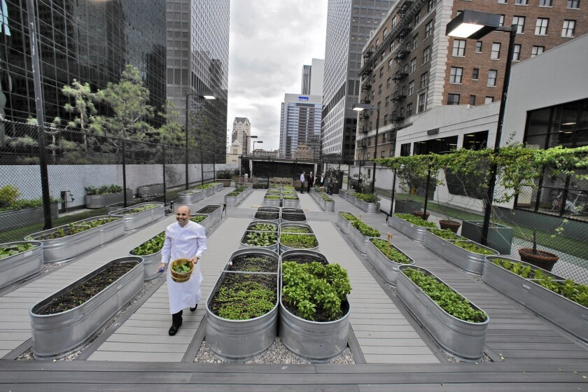 Galvanized horse troughs are used to grow a wide array of vegetables on top of the Jonathan Club.