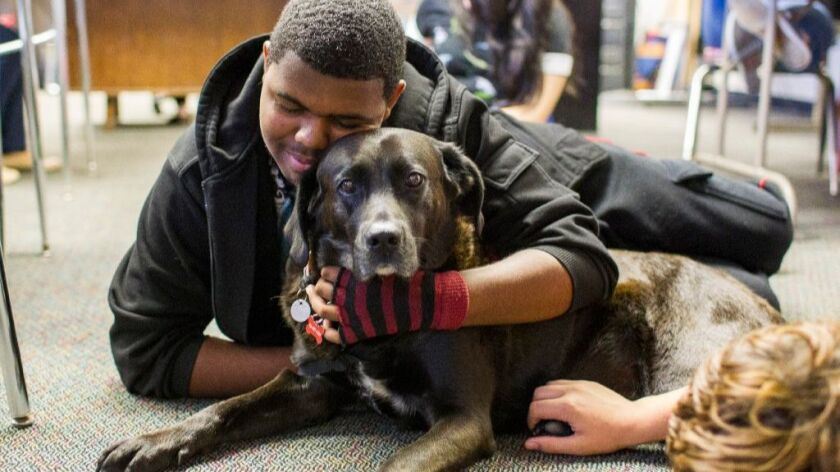 A LifeSchool student at Southwest High hugs 9-year-old therapy dog Cami, during class on Friday.