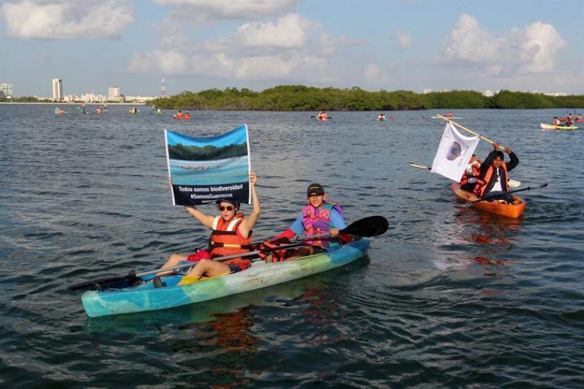 Representantes de diversas agrupaciones ambientalistas recorren el sistema de lagunas Nichupté, en Cancún (México), en el marco de la 13° Conferencia de las Naciones Unidas sobre Biodiversidad (COP13). EFE/Archivo