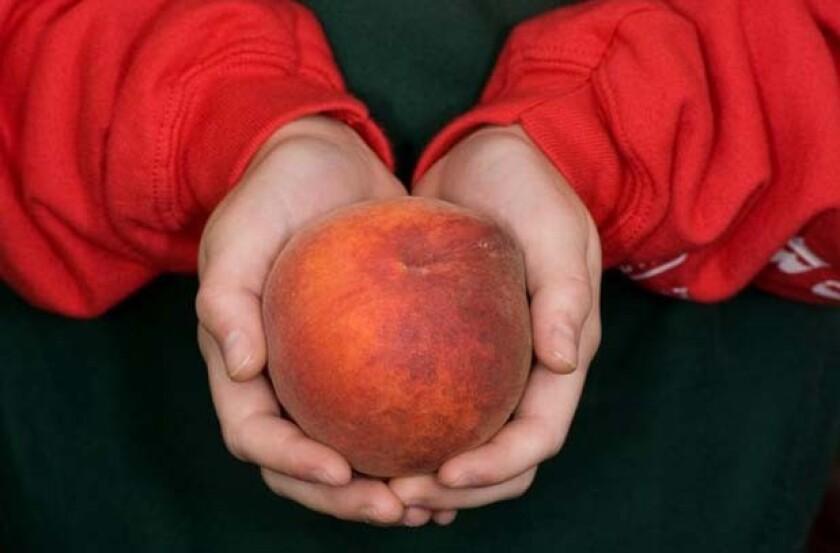 Elegant Lady peach (held by Alyssa Regier) grown by Regier Family Farms in Dinuba.