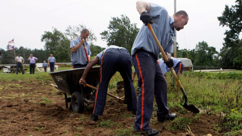 In this photo taken Tuesday, Aug. 4, 2009, inmates harvest potatoes at Southeastern Correctional Ins