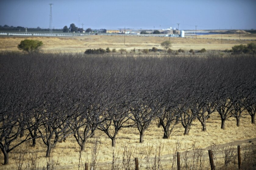 In this Oct. 2, 2009, file photo, a dead almond crop is seen in California's Westland Water District in Fresno, Calif. NASA scientists have begun deploying satellites and other advanced technology to help California water officials assess the state's record drought and better manage it. (AP Photo/