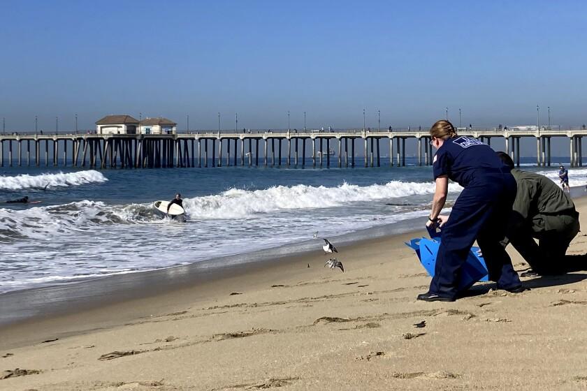Foto tomada el 20 de octubre del 2021 en Huntington Beach, California, de los desastres causados por el derrame petrolero. (Foto AP/Amy Taxin)