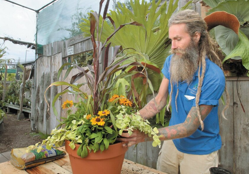 Chuck McClung from Walter Andersen Nursery adds lemon licorice plants to his potted arrangement.