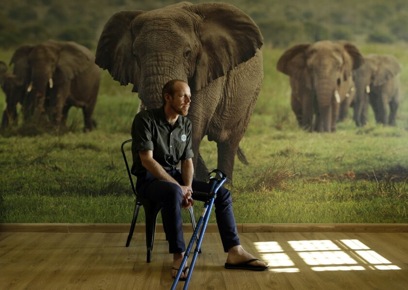 In this photo taken Monday, May 23, 2016, Erik Mararv, the manager of the Garamba National Park in Congo, is photographed against a poster backdrop of elephants during an interview with The Associated Press in Johannesburg, while recuperating from his injuries. Mararv described a firefight with elephant poachers in which he was wounded and three rangers were killed last month in Garamba which is vulnerable to attacks from a variety of armed groups that kill elephants for their ivory and operate across national borders. (AP Photo/Themba Hadebe)