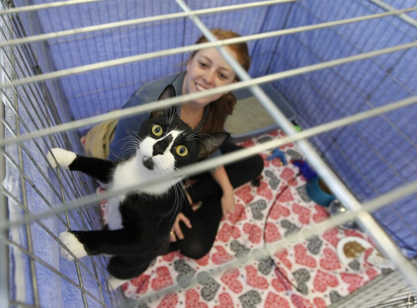 Fritzie plays in her cage with potential adopter Kelsey Nielson at a Rescue House adoption event. Earnie Grafton • U-T photos