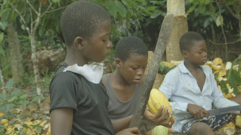 "A group of children using machetes to harvest cocoa in Ghana in a scene from ""Invisible Hands."" Cred"