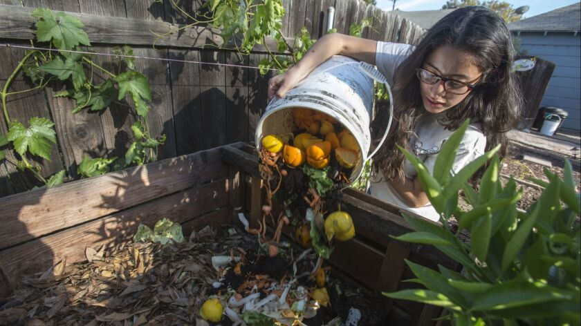 WEST COVINA, CA - April 11, 2013: Michelle Davila pours the veggie scraps to a composter at her frie