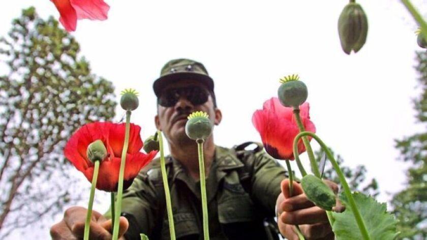 Durante décadas permanecieron en calma, incluso ajenos a la guerra contra el narcotráfico que ha causado miles de muertos en los últimos años en México.
