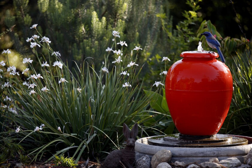 ALTADENA, CA - MAY 4, 2015: Bauer water fountain with African iris' in Peggy Casey and Erik Hillard