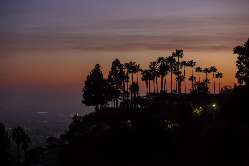 L.A. Trees