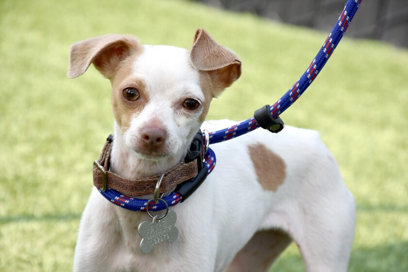 Pet of the Week is 'Cherry.'
