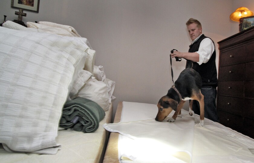 A dog sniffing for bedbugs.
