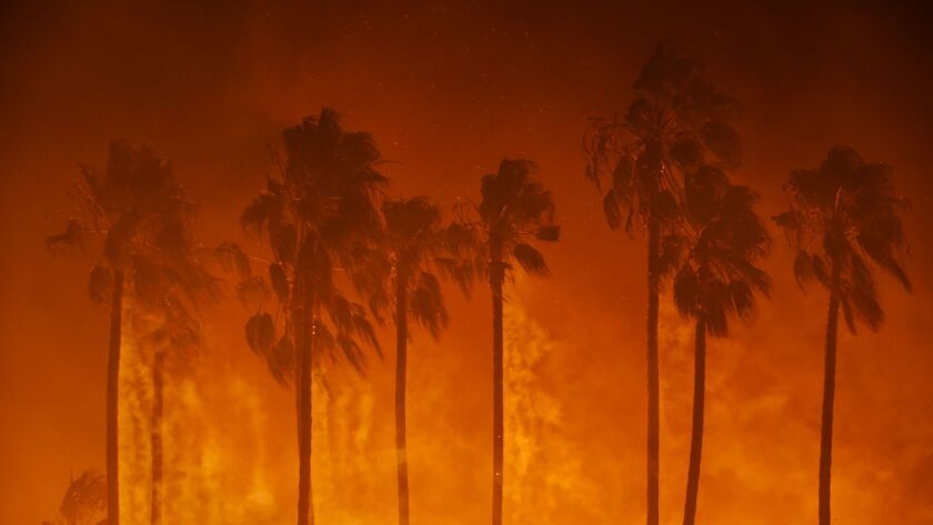 Flames and smoke engulf palm trees in Ventura during the Thomas fire on Dec. 5, 2017.