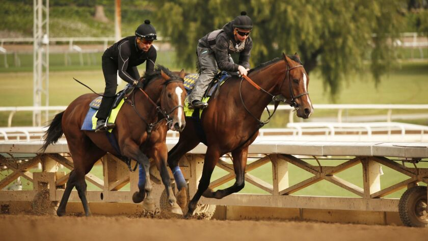 Riders and horses train Santa Anita, which is considering banning the use of whips.