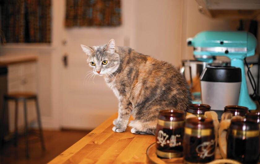 Matthew Williamson's cat