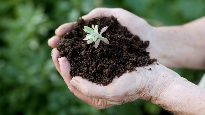 Feed your soil with organic amendments such as compost and aged manure.