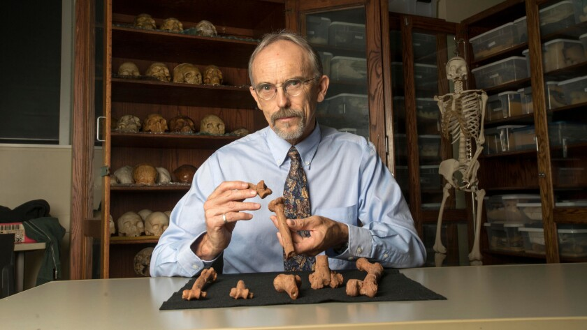 University of Texas professor John Kappelman holds 3-D-printed copies of pieces of Lucy's skeleton. Lucy suffered compressive fractures in her right humerus when she died 3.2 million years ago.