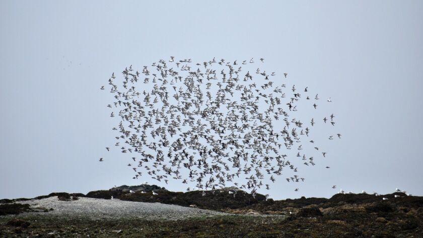 la-oe-van-hemert-migration