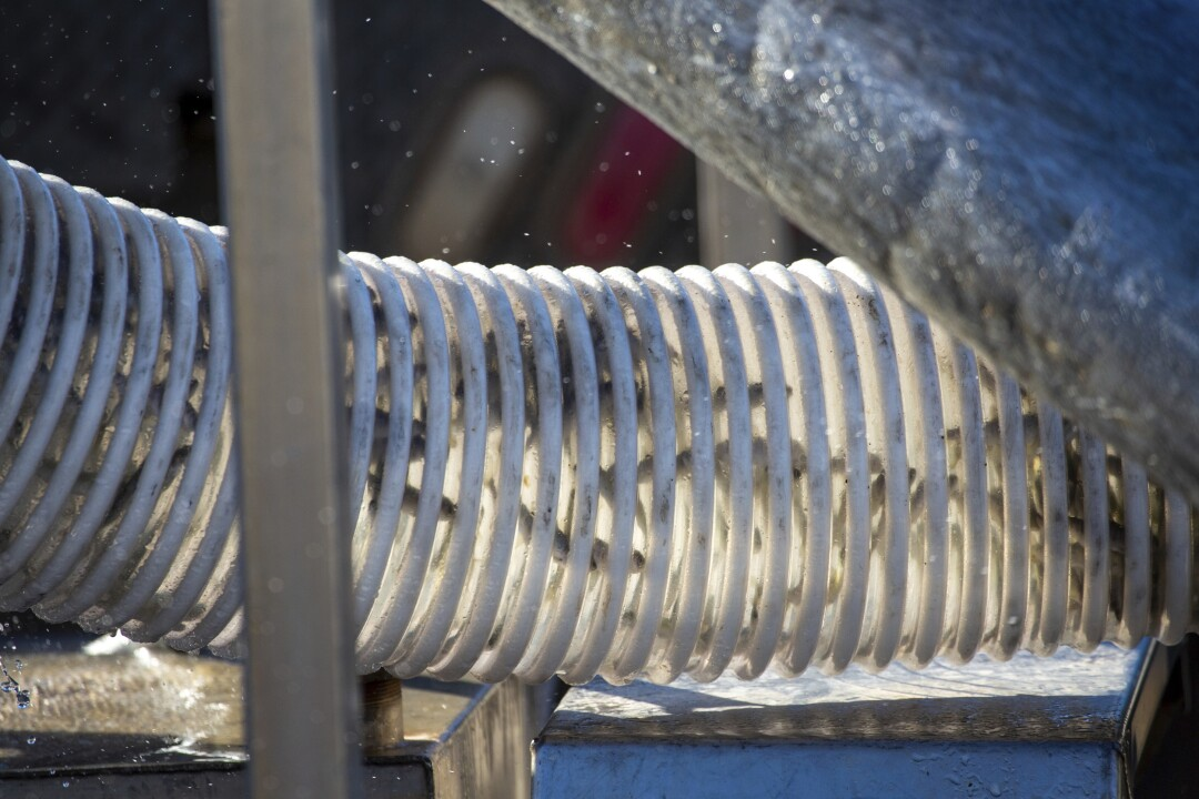Juvenile chinook salmon are piped into a tanker truck at the Iron Gate Fish Hatchery.